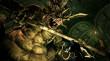 Dark Souls Prepare to Die Edition thumbnail