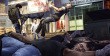 Sleeping Dogs Definitive Edition thumbnail